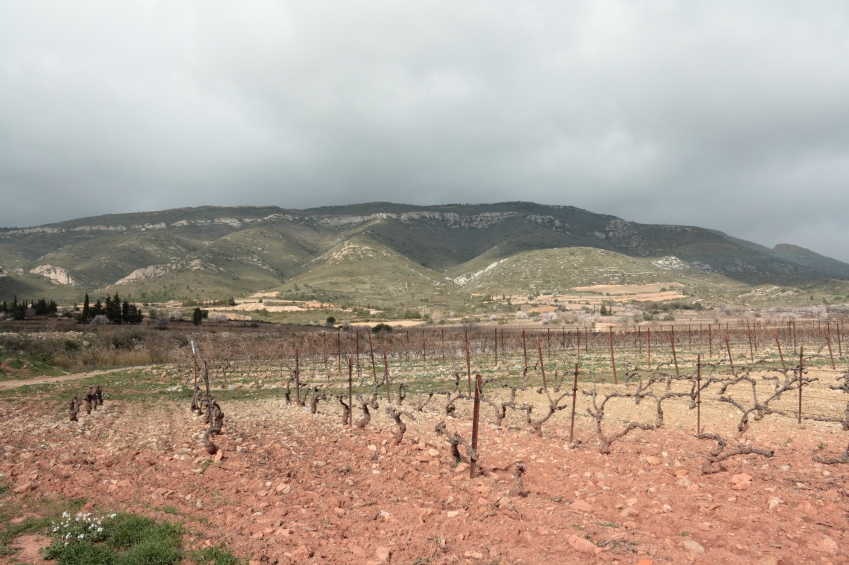 Vineyard in Corbieres iStock_000020333434_Small